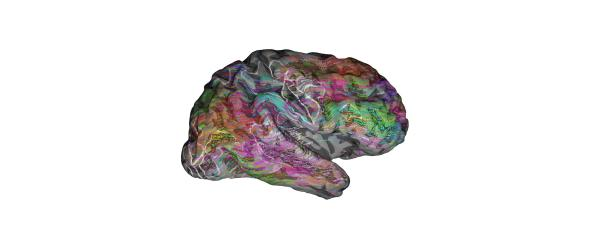 The Brain Map